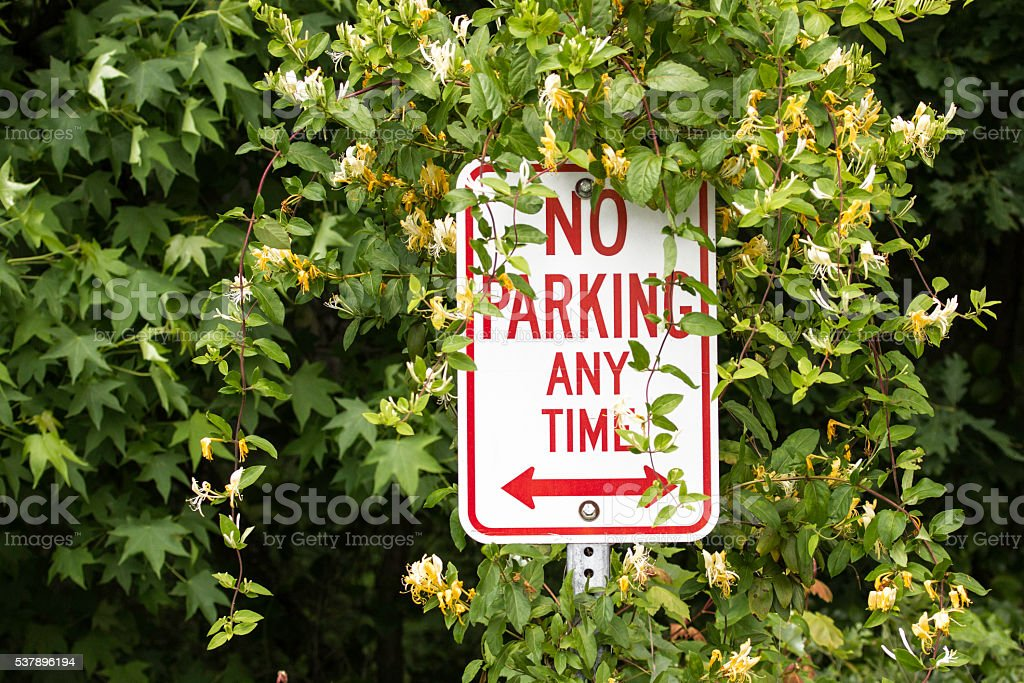 No Parking overrun by Honeysuckle stock photo