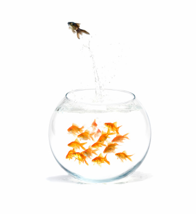 Fishes perfectly express my feelings for racism