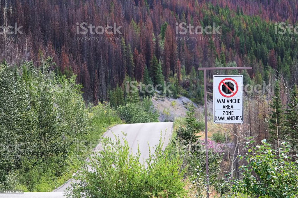 A no stopping avalanche sign with a road in the background stock photo