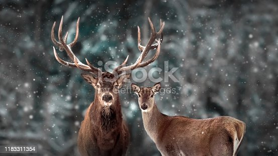 Noble deer family in winter snow forest. Artistic winter christmas landscape. Winter wonderland.