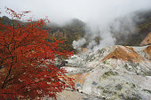the colorful of autumn season in japan