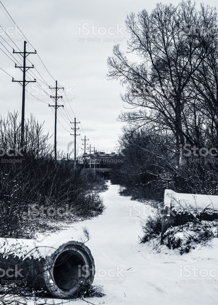Nobyl Roots stock photo
