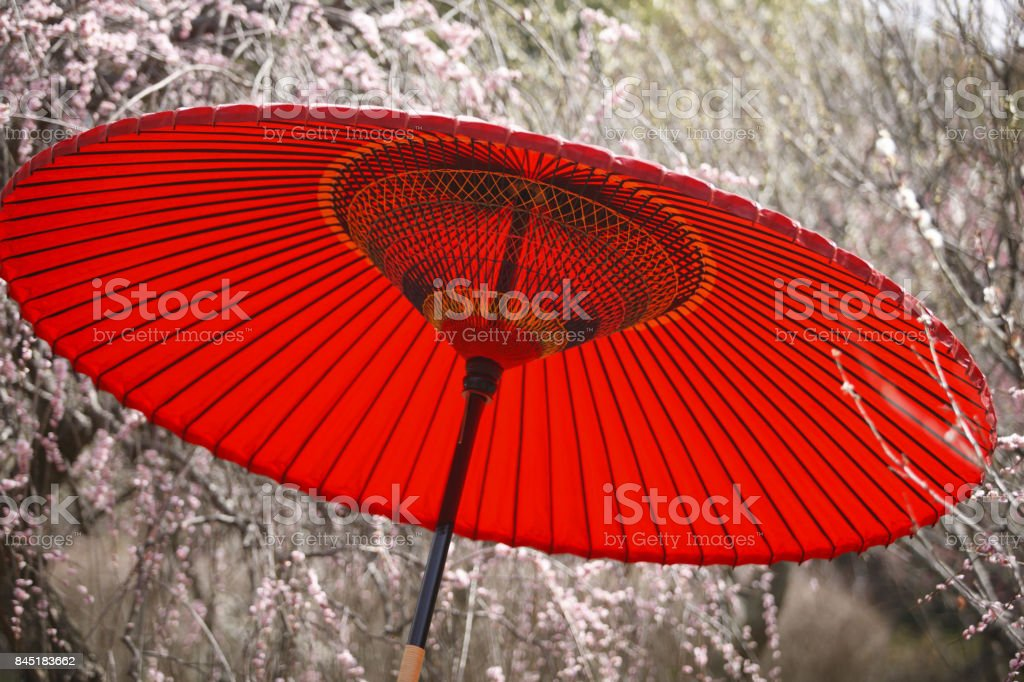 Nodate umbrella and plum stock photo