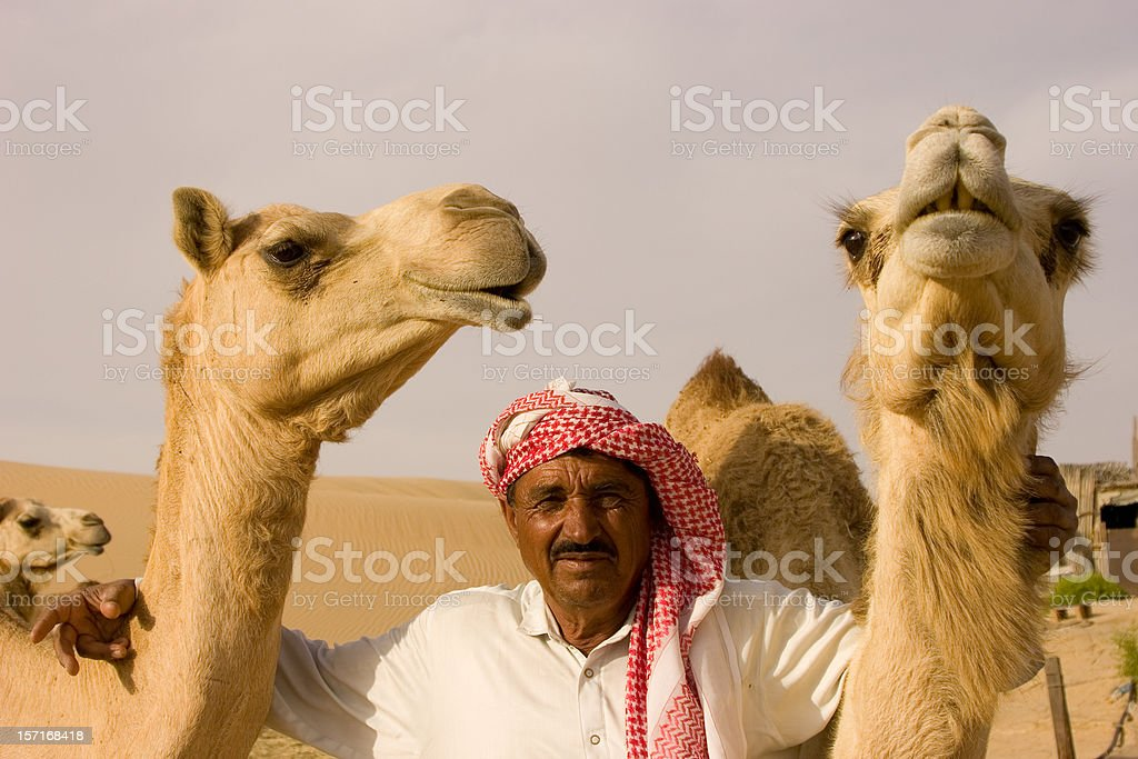Nomad and camels on a camelfarm royalty-free stock photo