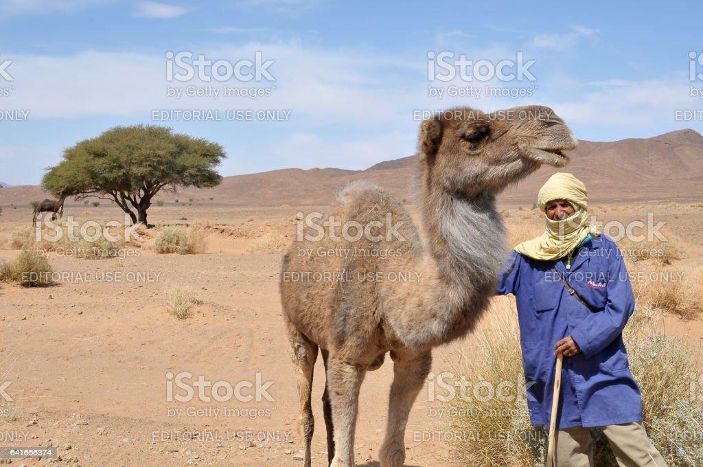 Nómada con camellos en el sur de Marruecos - foto de stock