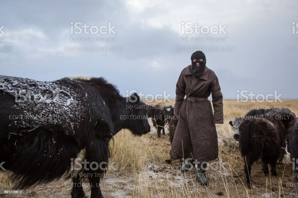 nomadic man with his animals in Western Mongolia stock photo