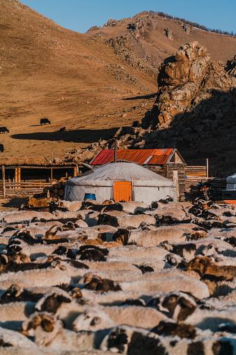 Nomadic Village In Gobi Desert At Sunset Stock Photo - Download Image Now