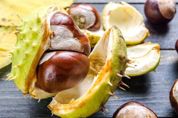 Non edible chestnuts stock photo