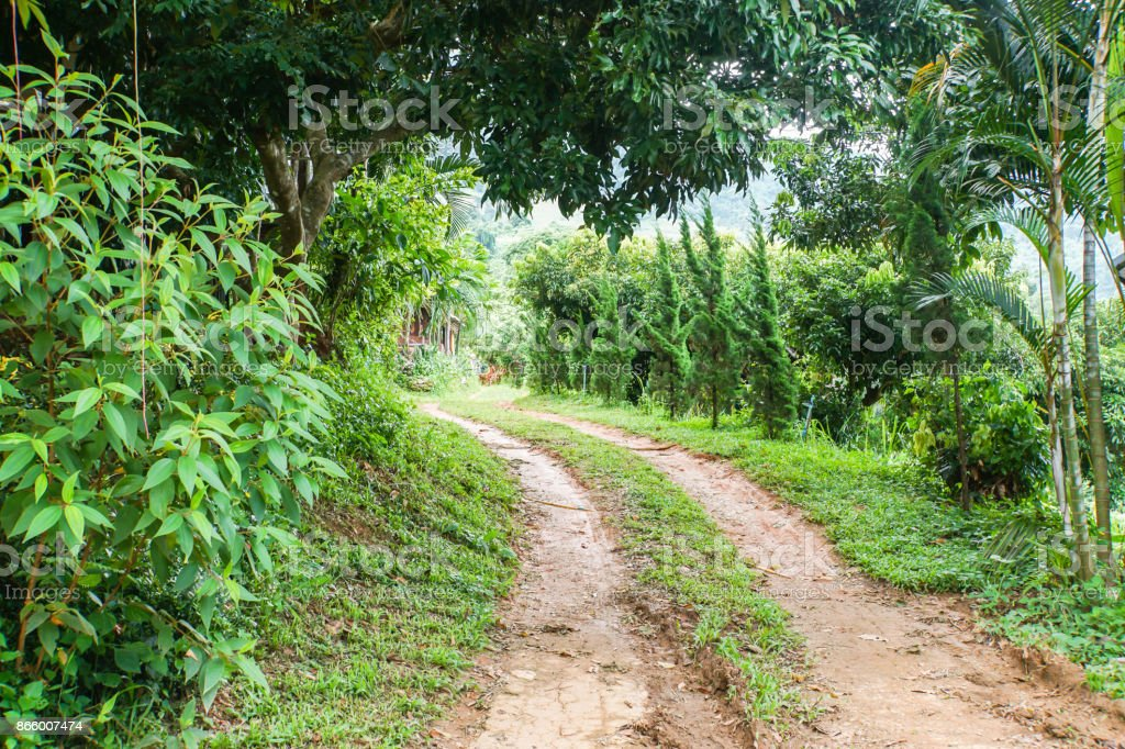 non-asphalt road in the deep green forest stock photo