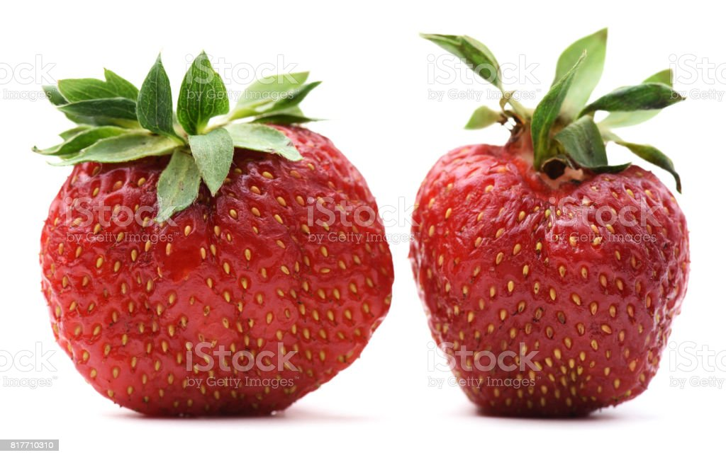 Non-ideal organic heirloom strawberries isolated stock photo