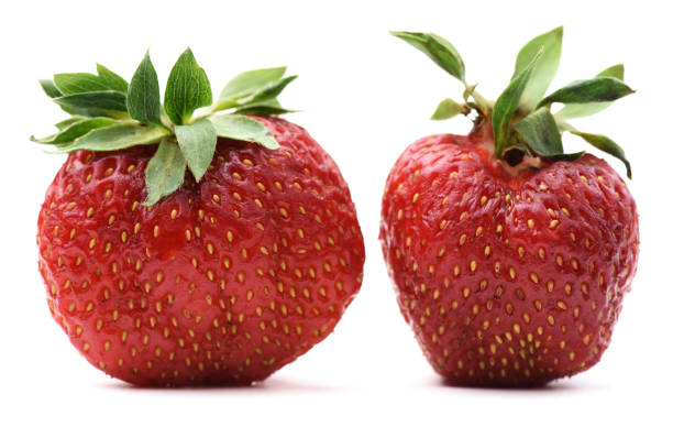 non-ideal organic heirloom strawberries isolated - imperfection stock photos and pictures