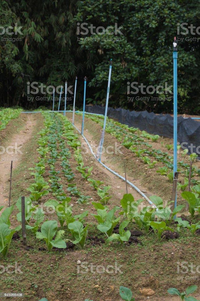 Non-Toxic Vegetable stock photo