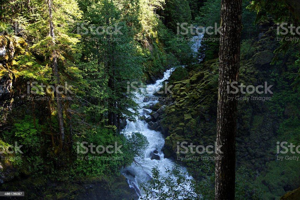 Nooksack Rainforest River stock photo
