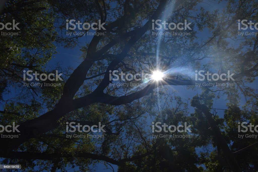 Noon sun in Florida stock photo
