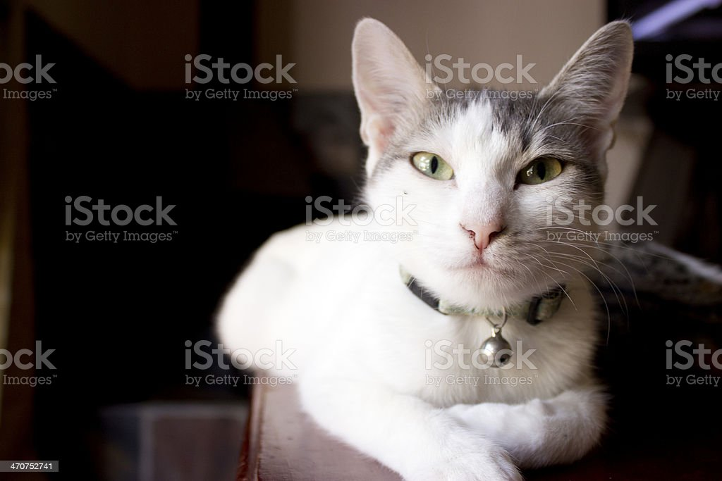 No-one relaxes like kitty does stock photo