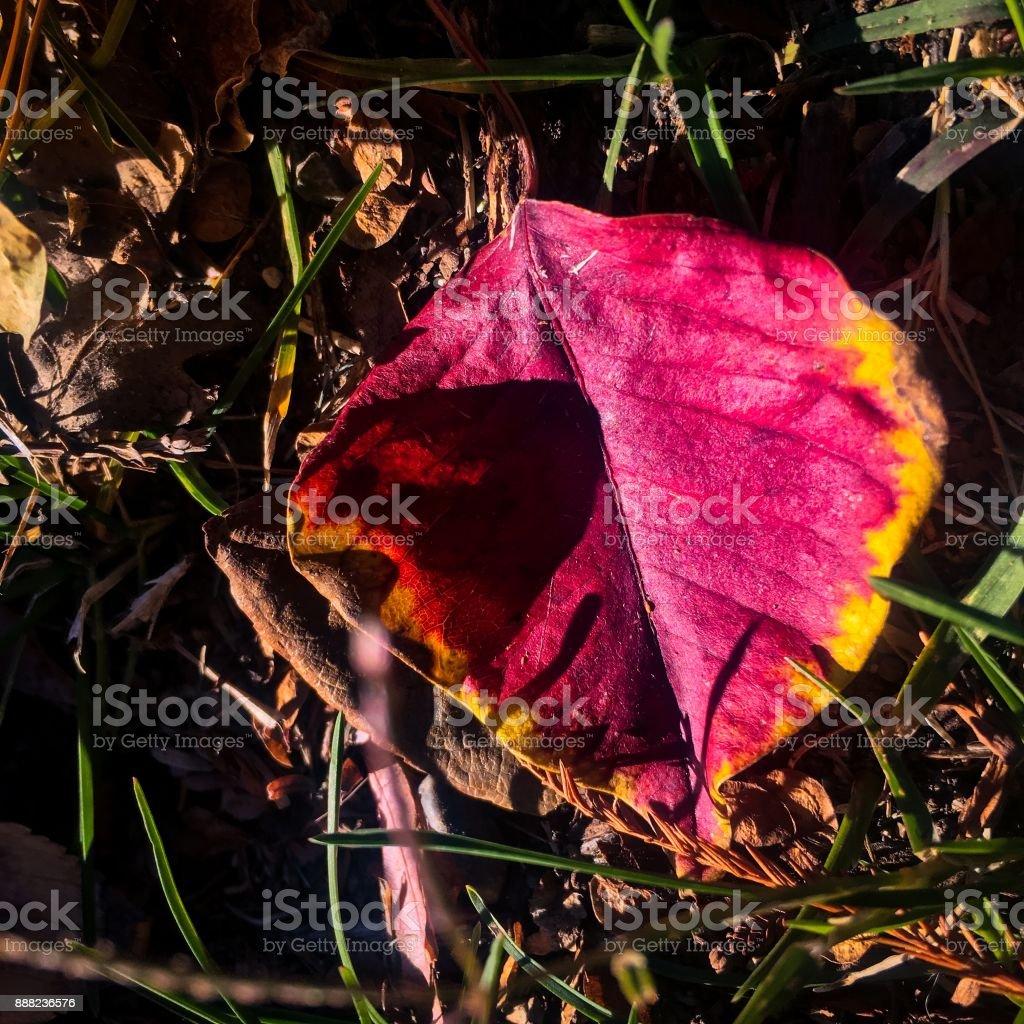 NorCal Autumn stock photo
