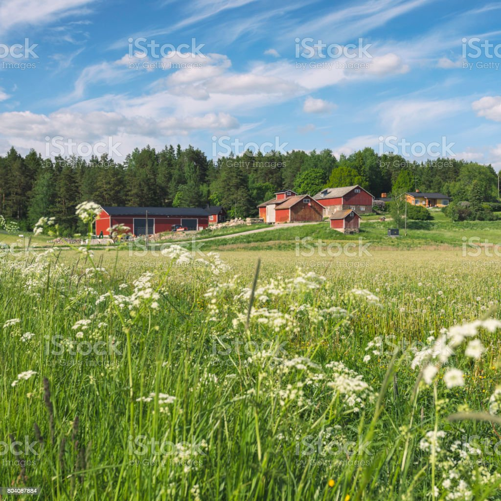Agricultural buildings and a field in early summer in Finland.