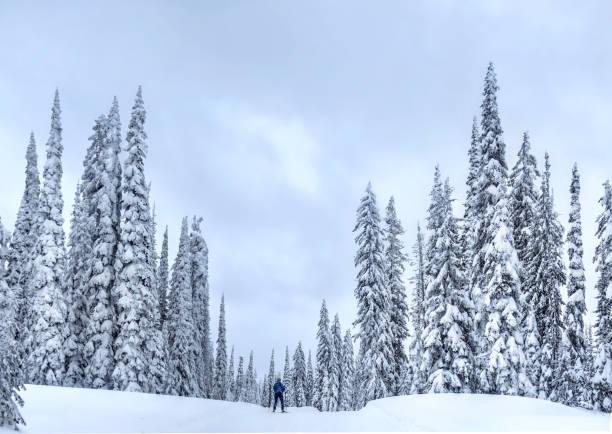 Nordic ski near Kelowna at Big White Ski Resort on a snowy day. stock photo