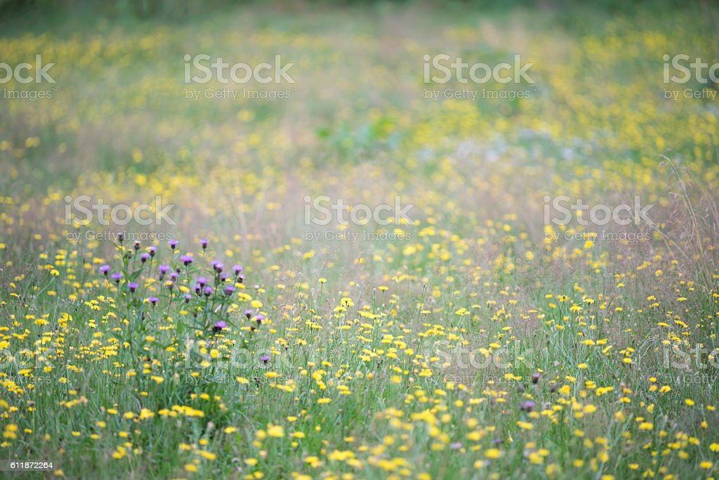 Nordic summer meadow royalty-free stock photo