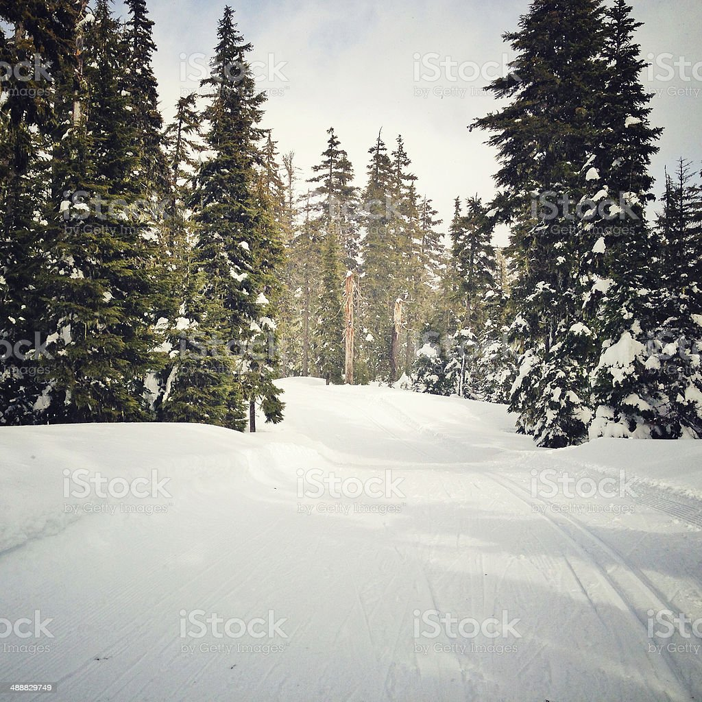 Nordic track royalty-free stock photo