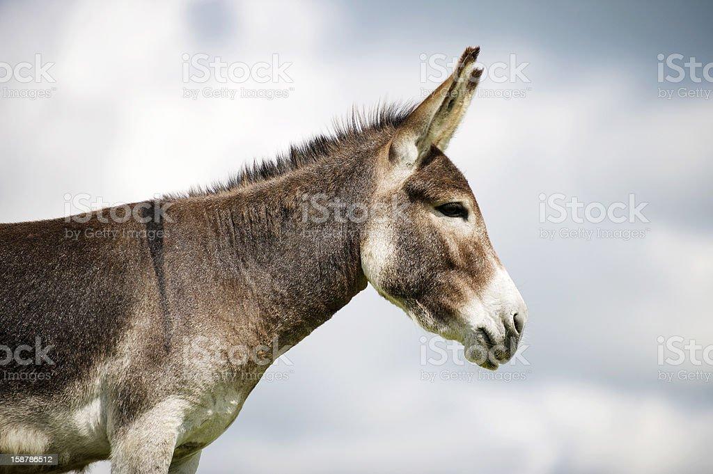 Norfolk Broads, Donkey profile view stock photo