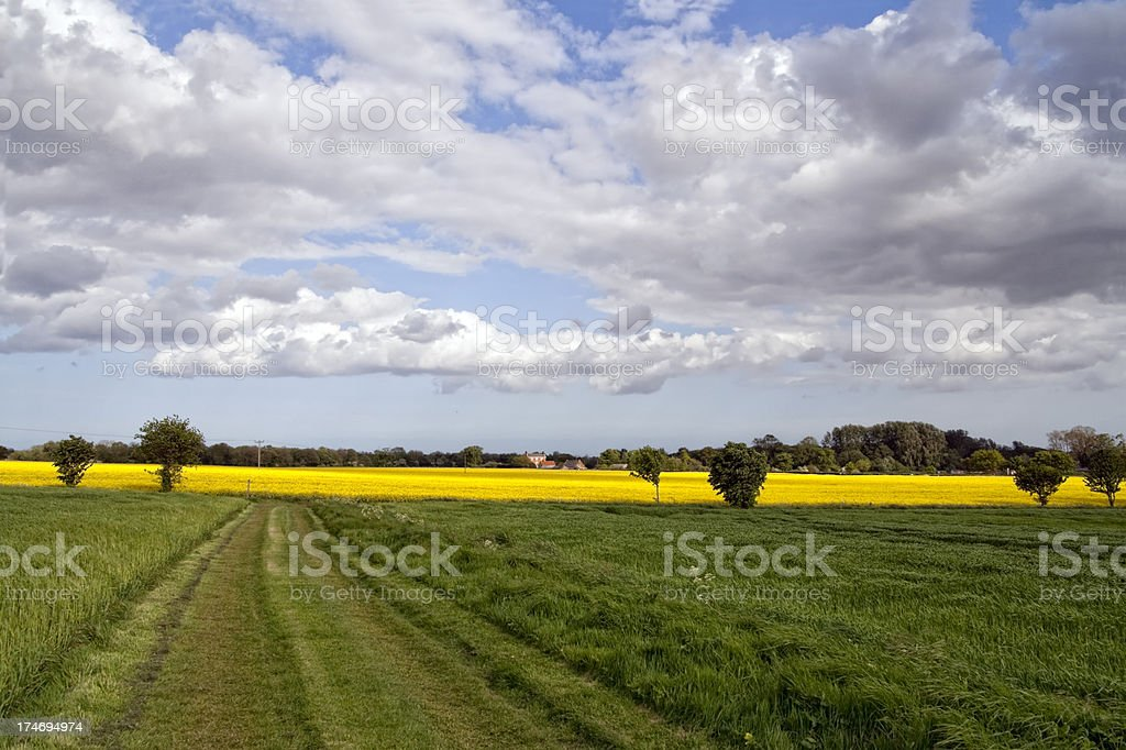 Norfolk fields with scudding clouds stock photo