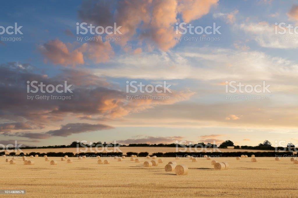 Norfolk hay bales basking in the sunset glow stock photo