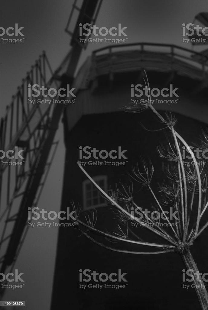 Norfolk Windmill stock photo