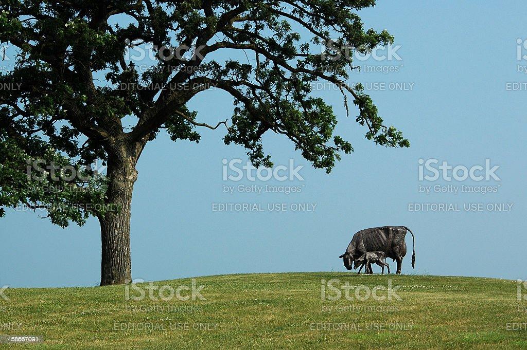 Norma Lyon cow sculpture stock photo