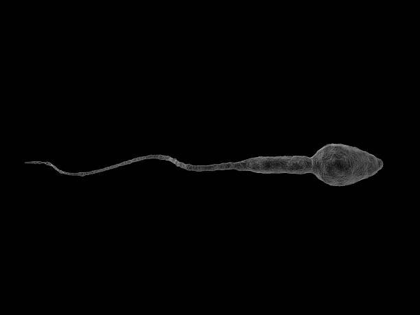 esperma normal - vasectomia - fotografias e filmes do acervo