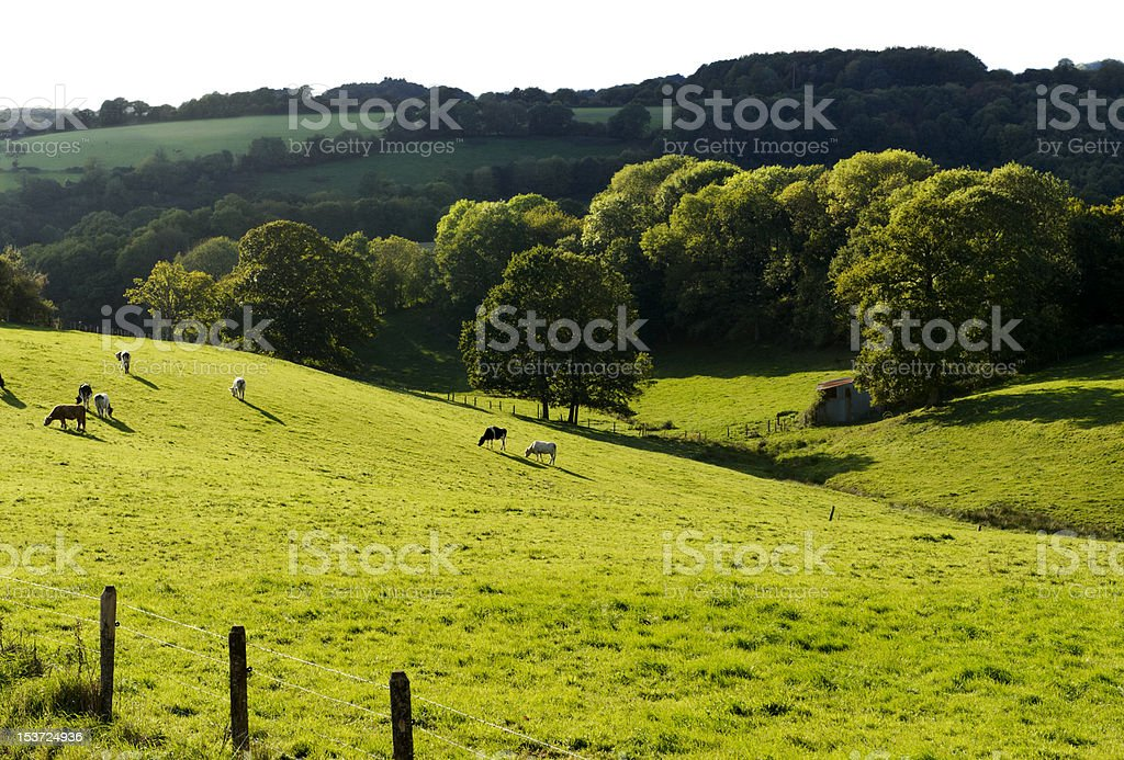 Normandy Landscape, hills, meadows with cows and trees stock photo