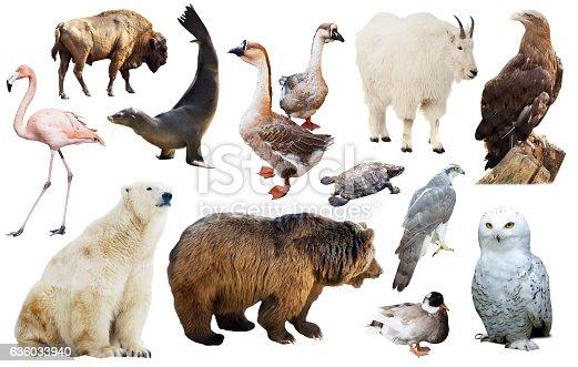 1065862132 istock photo north american animals isolated 636033940