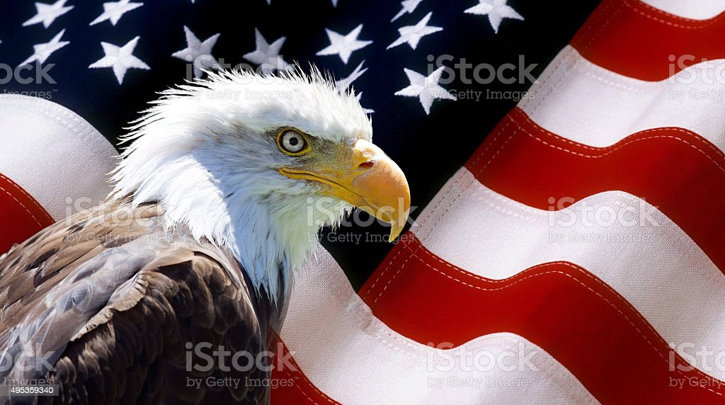 North American Bald Eagle on american flag stock photo