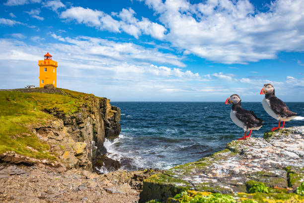 North Atlantic puffins sitting in front of orange lighthouse in Iceland, sunny day, closeup North Atlantic puffins sitting in front of orange lighthouse in Iceland auk stock pictures, royalty-free photos & images