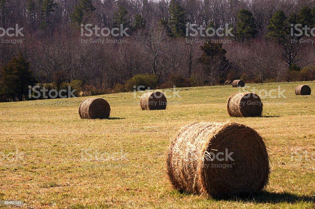 North Carolina Hayfield royalty-free stock photo
