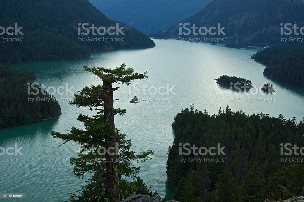 North Cascades Green Tree stock photo