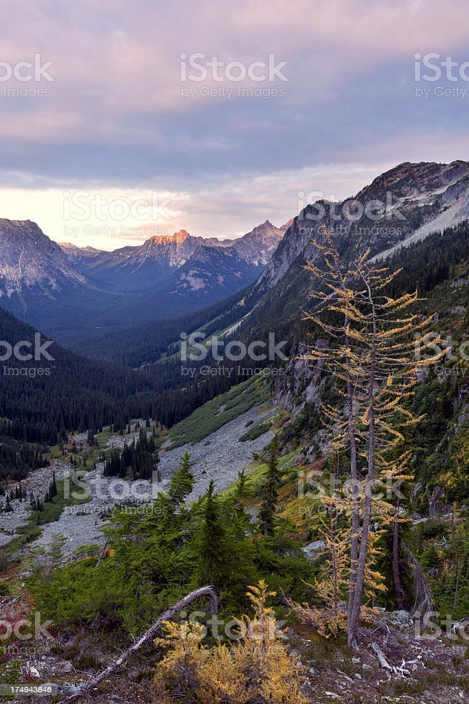 North Cascades National Park Larch Trees royalty-free stock photo