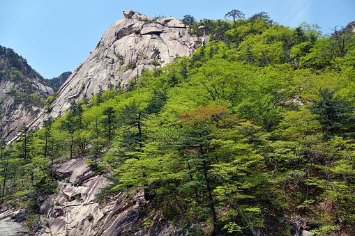 北朝鮮ダイヤモンドの山クムガン山 - マツ科のストックフォトや画像を ...