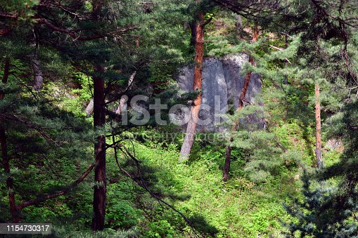 North Korea. Mt. Kumgang biosphere reserve. Lagoon Samil. Amazing scenery. A large granite smooth rocks between trunks of the red korean pine. Red korean pine forest