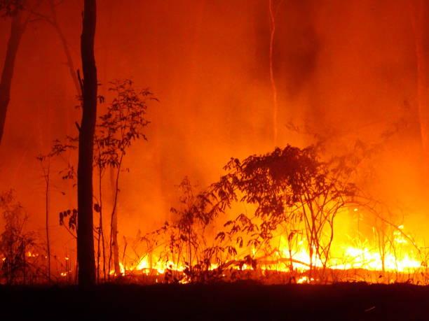 het noorden van bamaga, qld 2. - bosbrand stockfoto's en -beelden