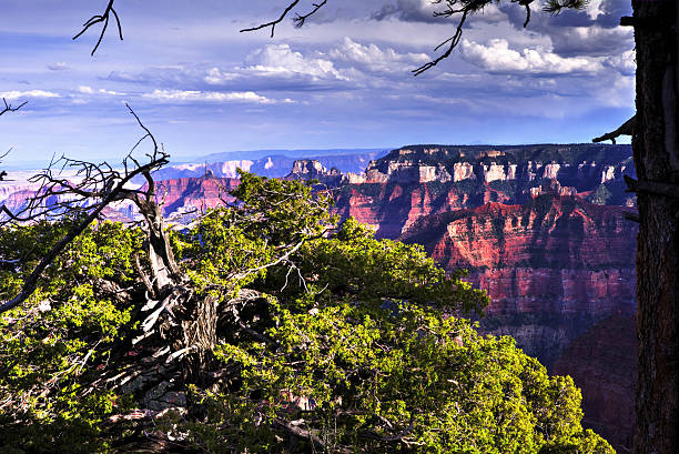 North Rim Grand Canyon, Arizona, USA stock photo