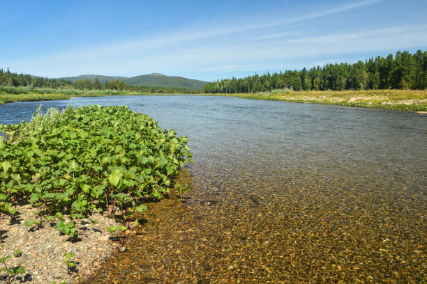 North river on a summer day. stock photo
