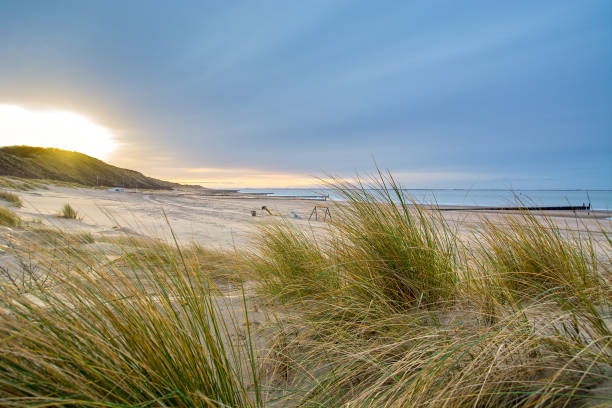 north sea beach in the netherlands - sand dune stock photos and pictures