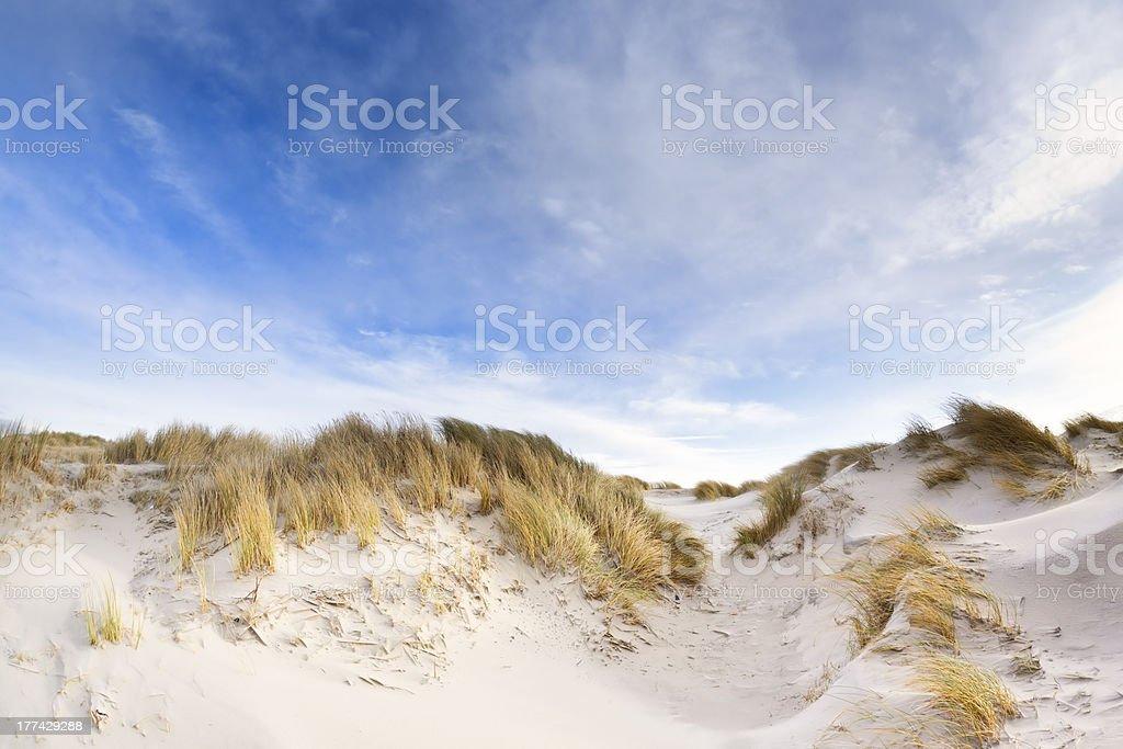 Nordsee-Dünen – Foto