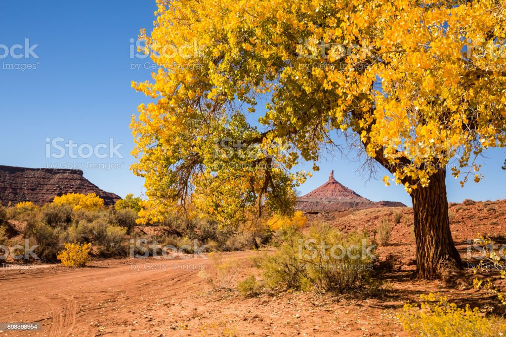 North Sixshooter in Bears Ears through golden yellow leaves of cottonwood tree in autumn stock photo