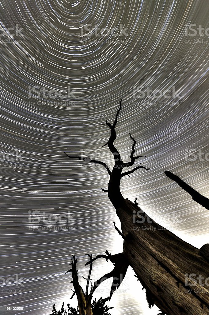 North Star Dead Tree HDR Spiral royalty-free stock photo