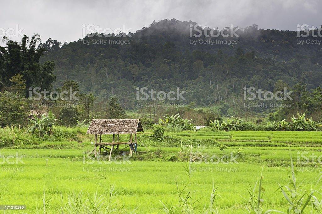 North Thailand Rice Field Hut Mae Hong Son stock photo