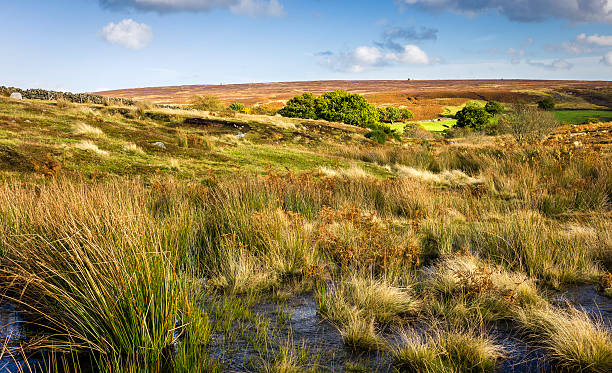 North York Moors, Goathland, Yorkshire, UK. stock photo