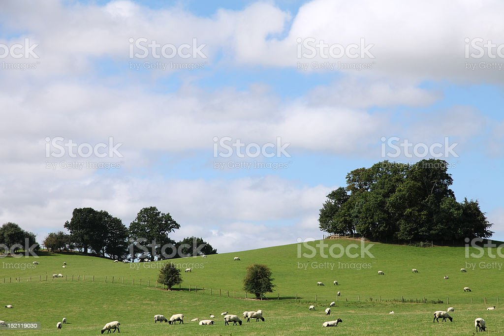 Northamptonshire Countryside Sheep Fields stock photo