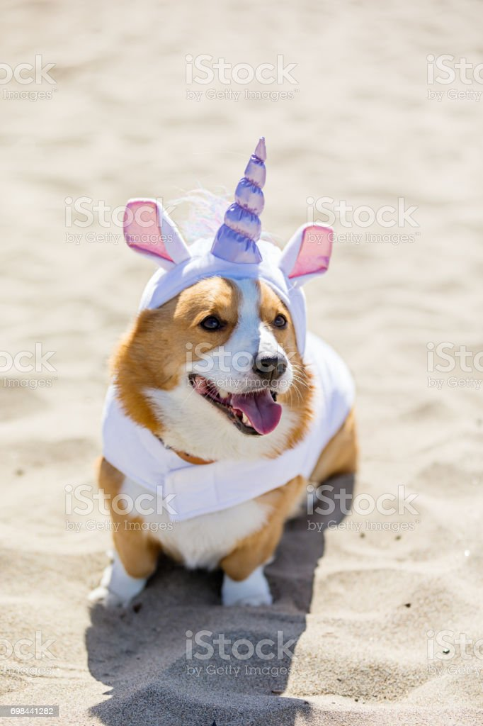 Norte de California Corgi Con - foto de stock